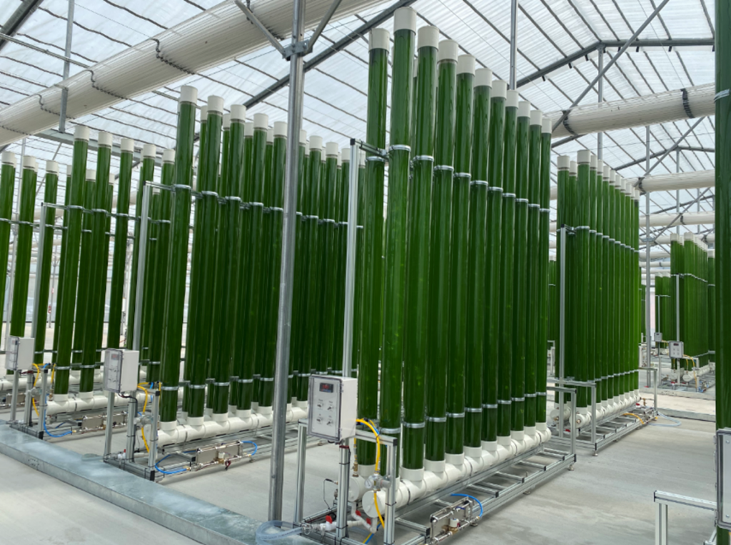 TrueAlgae's production facility. (Image: TrueAlgae)